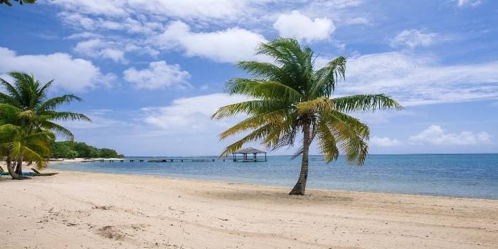 Bild von einem Strand und einer Palme