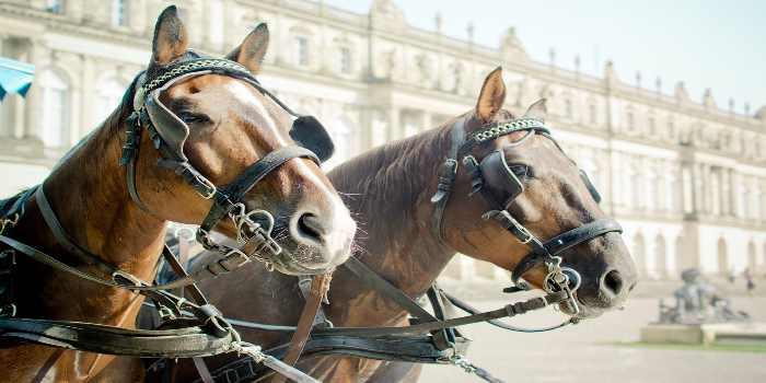 2 Pferde vor einem Gebäude in Wien