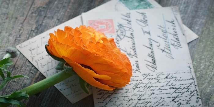 Bild von einer Postkarte mit einer gelben Blume darauf