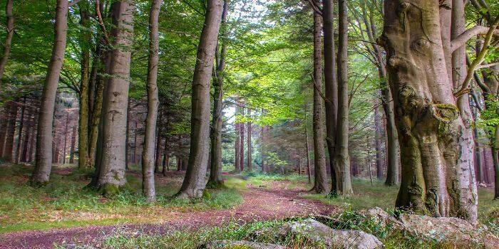 Urlaub im Bayerischen Wald. Aber eben nicht nur…
