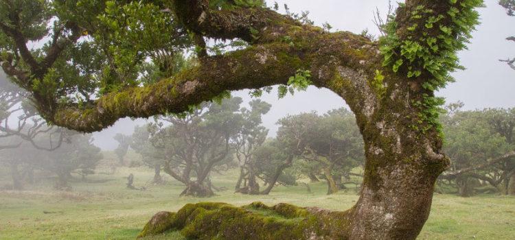 Wanderurlaub auf Madeira meine Tipps