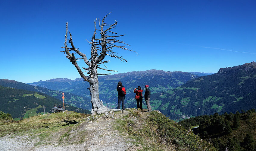 Ein dürrer Baum wo drei Menschen daneben stehen und die Aussicht auf die Berge genießen.